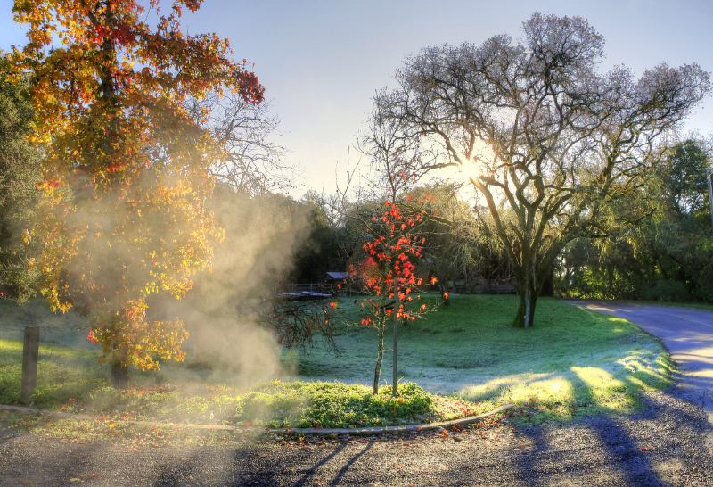 sonoma_cold_morning-x2